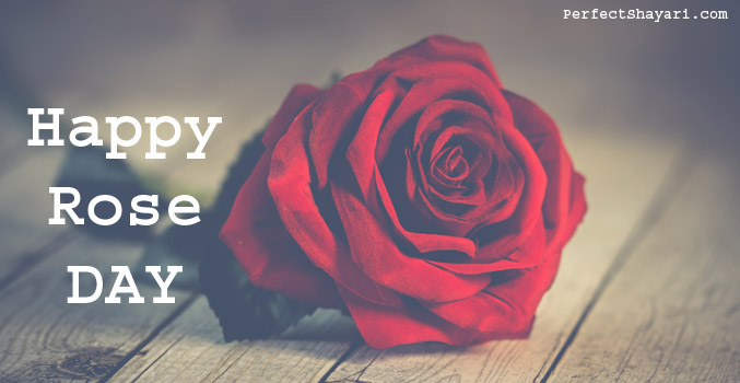 Happy Rose Day Wishes Quotes 2020 Images And Greetings